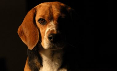 Dog Wallpapers and Photos 4K Full HD