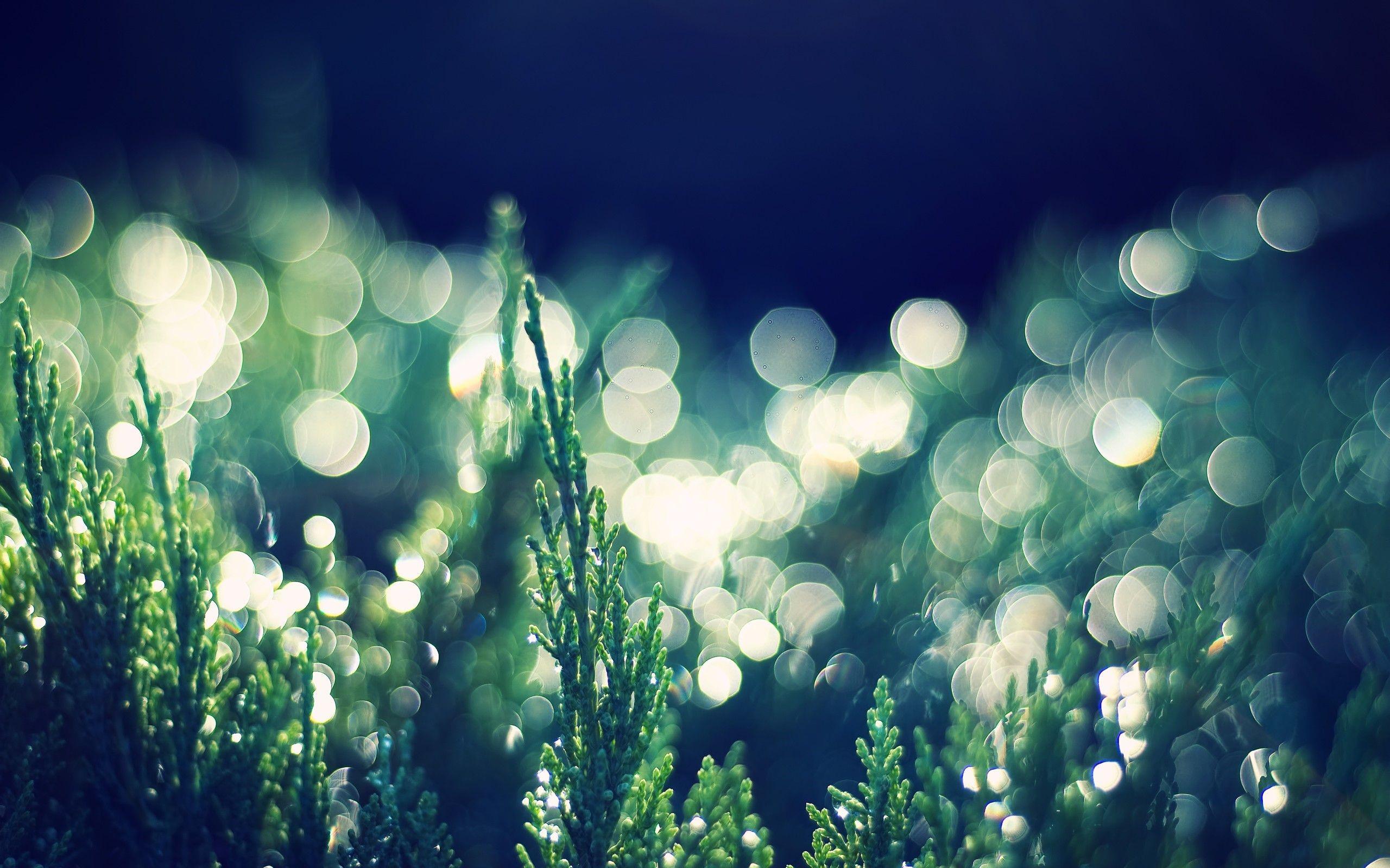 Bokeh Light in Nature HD Wallpaper
